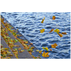 Mindfulness: thoughts are like autumn leaves in the breeze - MJ270019